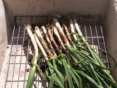 grilling calcots
